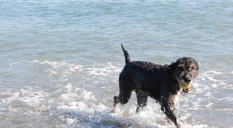 Arrinconados Playa Canina