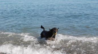 Los animales podrán seguir disfrutando de un saludable baño en el mar.