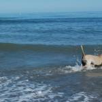 A dos días de la llegada del verano, los perros ya disfrutan del agua salada.