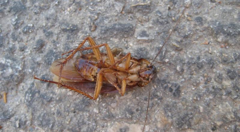 Arrinconados Cucaracha