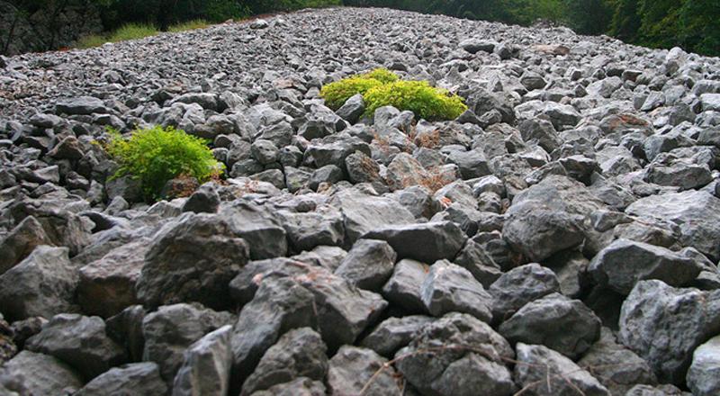 Arrinconados Piedras