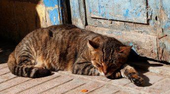 Arrinconados Gato