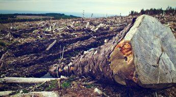 Arrinconados Deforestacion
